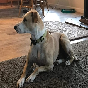 adoptable Dog in Albany, OR named Frankie