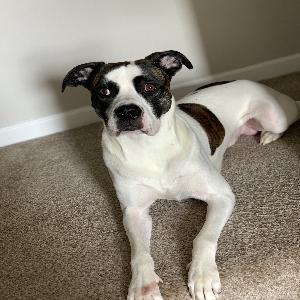 adoptable Dog in La Vergne, TN named Roscoe