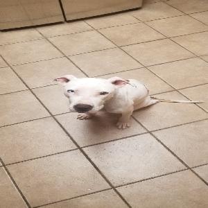 adoptable Dog in Prairieville, LA named Stella