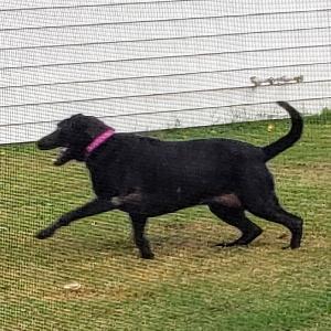 adoptable Dog in Virginia Beach, VA named Athena