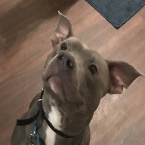 adoptable Dog in Columbia, SC named Draco