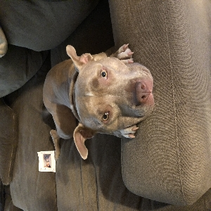 adoptable Dog in , MS named Egypt