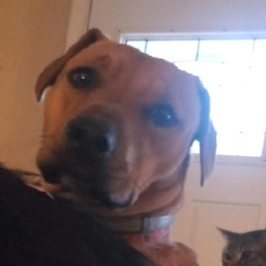 adoptable Dog in Oklahoma City, OK named Susie