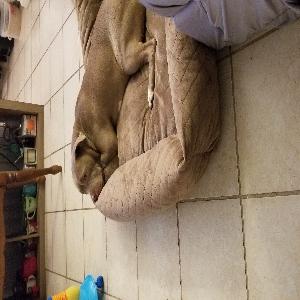 adoptable Dog in , DE named Luna