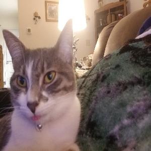 adoptable Cat in Old Bridge, NJ named Chloe