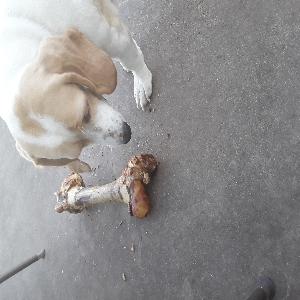 adoptable Dog in Rush Springs, OK named Sadie