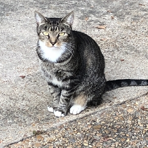 adoptable Cat in , MS named Mia