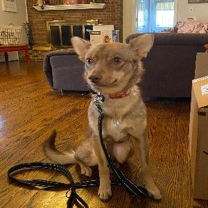 adoptable Dog in , DE named Emma