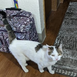 adoptable Cat in Boise,ID named Lily