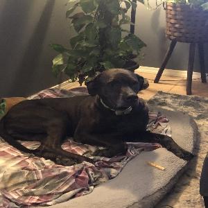 adoptable Dog in Tulsa, OK named Cora