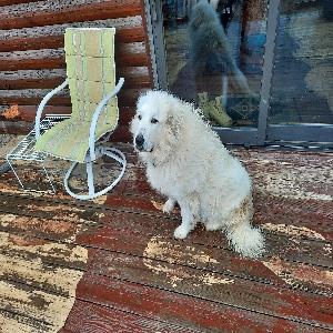 adoptable Dog in Strafford, MO named Ellie