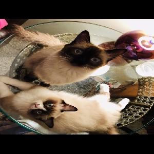adoptable Cat in Barnhart, MO named Penenlope