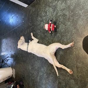 adoptable Dog in Ponchatoula, LA named Luna