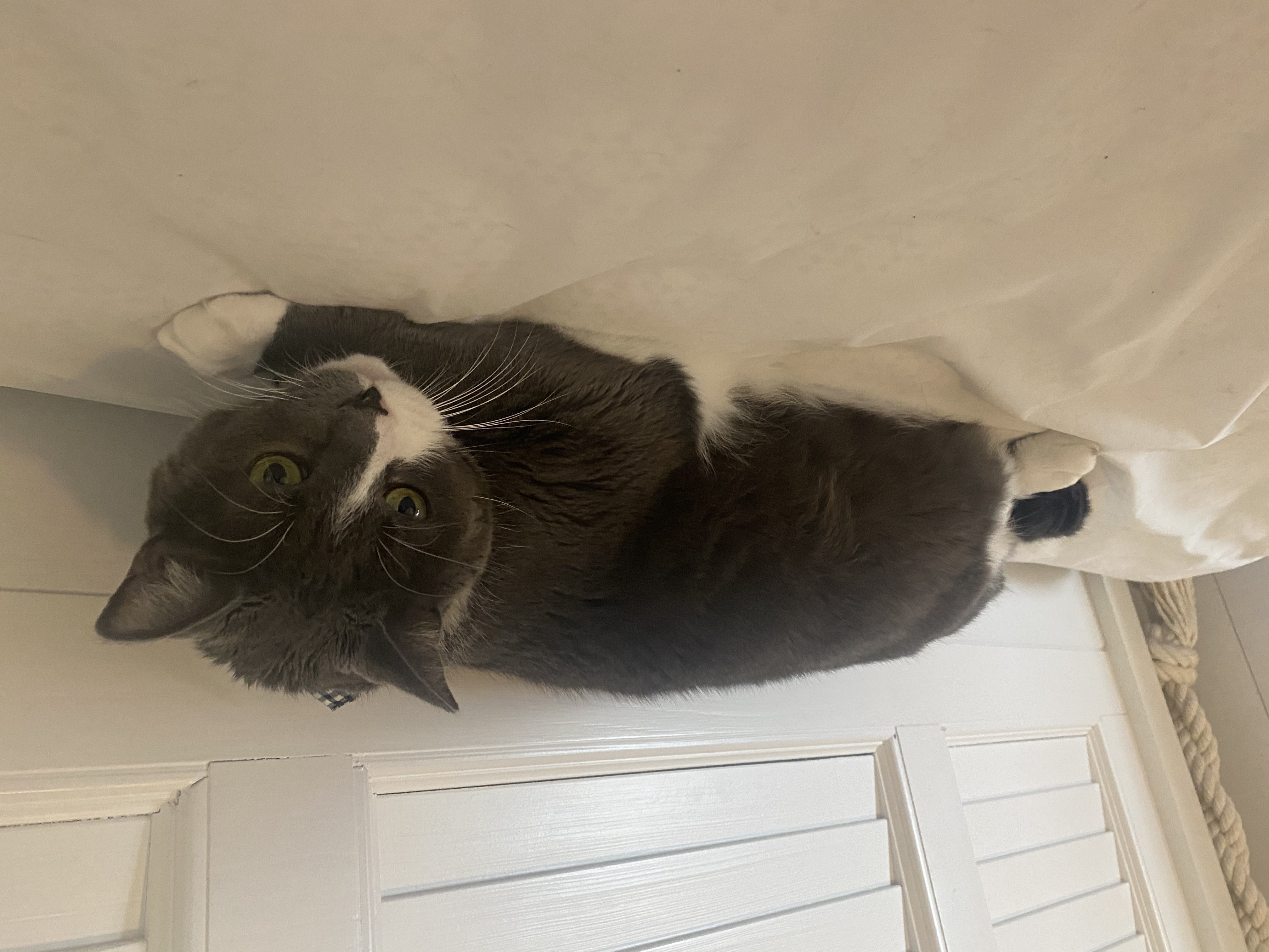 adoptable Cat in Biloxi,MS named Boots