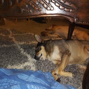 adoptable Dog in Colorado Springs, CO named Lidy