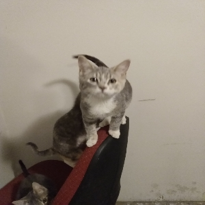 adoptable Cat in Downey, ID named Q