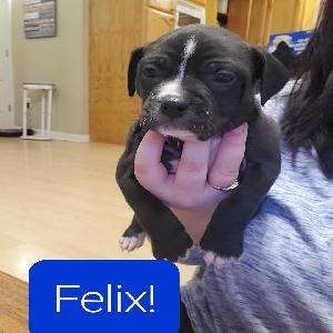 adoptable Dog in Saint Amant, LA named Felix