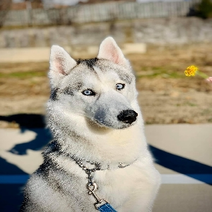adoptable Dog in Birmingham, AL named Sterling