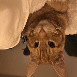 adoptable Cat in Ellensburg, WA named Seamus