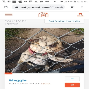 adoptable Dog in Titusville, FL named Maggie