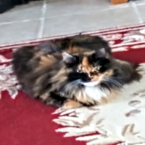 adoptable Cat in Morton, WA named Baby