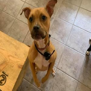 adoptable Dog in Mobile, AL named Rita