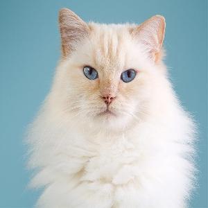 adoptable Cat in Oklahoma City, OK named Sandy