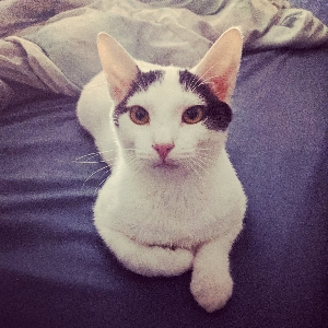 adoptable Cat in New Tazewell, TN named Sassafras
