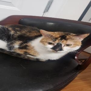 adoptable Cat in Newark, NJ named Johanna