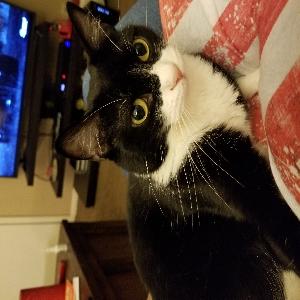adoptable Cat in Omaha, NE named Kiri