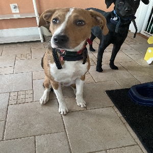 adoptable Dog in Ashland, VA named Cinnamon