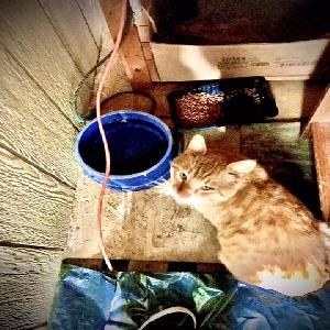 adoptable Cat in Weehawken, NJ named Jack