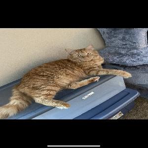 adoptable Cat in Omaha, NE named Tucker
