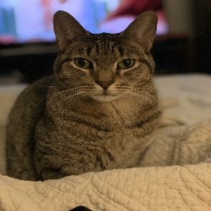 adoptable Cat in Elizabeth, NJ named Scooter