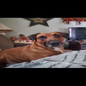 adoptable Dog in Audubon, NJ named Zeus