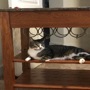 adoptable Cat in Foley, AL named Spice
