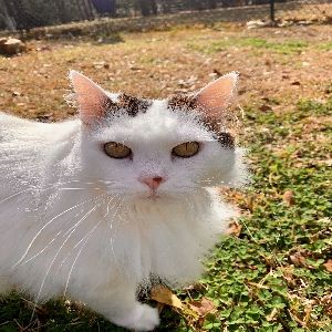 adoptable Cat in Wetumpka, AL named Tiddy