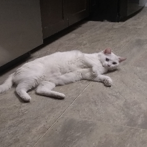 adoptable Cat in De Soto, MO named Casper