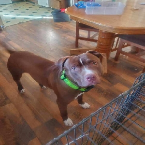 adoptable Dog in , WY named Cash