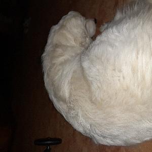 adoptable Dog in Fairbury, NE named Molly