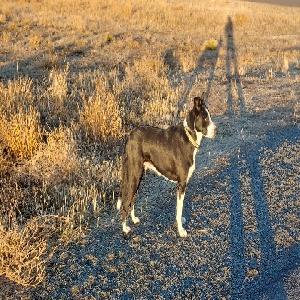 adoptable Dog in Klamath Falls, OR named Whitney