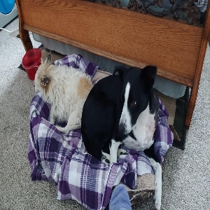 adoptable Dog in Klamath Falls,OR named Whitney