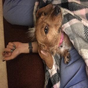 adoptable Dog in Denham Springs, LA named Juliet or JuJu