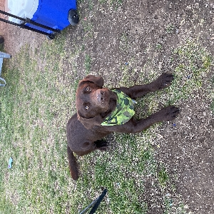 adoptable Dog in Nampa, ID named Colt
