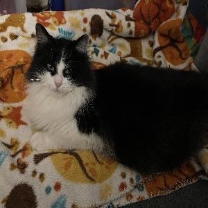 adoptable Cat in Huntington, WV named PB