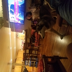 adoptable Dog in Hailey, ID named Kiara