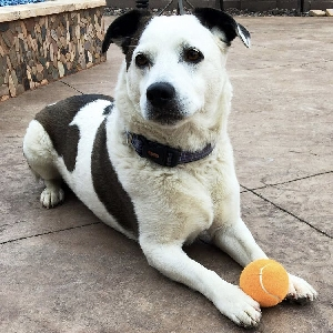 adoptable Dog in Saint George, UT named Snoopy