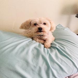 adoptable Dog in Nashville, TN named Molly
