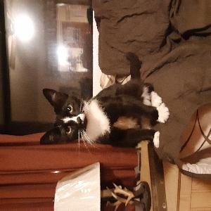 adoptable Cat in Saint Paul, VA named Allie