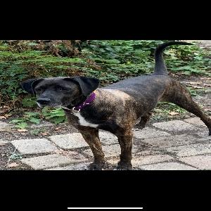 adoptable Dog in Monroe, LA named Birdie